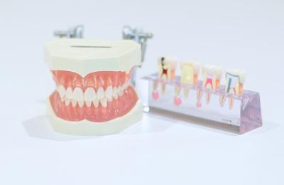 幸田町歯科医院 検査